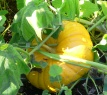Gresskar i hagen